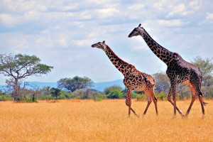 Die besten Safari Tipps
